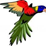 এবার java ইউজার দের জন্য নিয়ে আসলাম talking parrot কথাবলা টিয়া পাখি