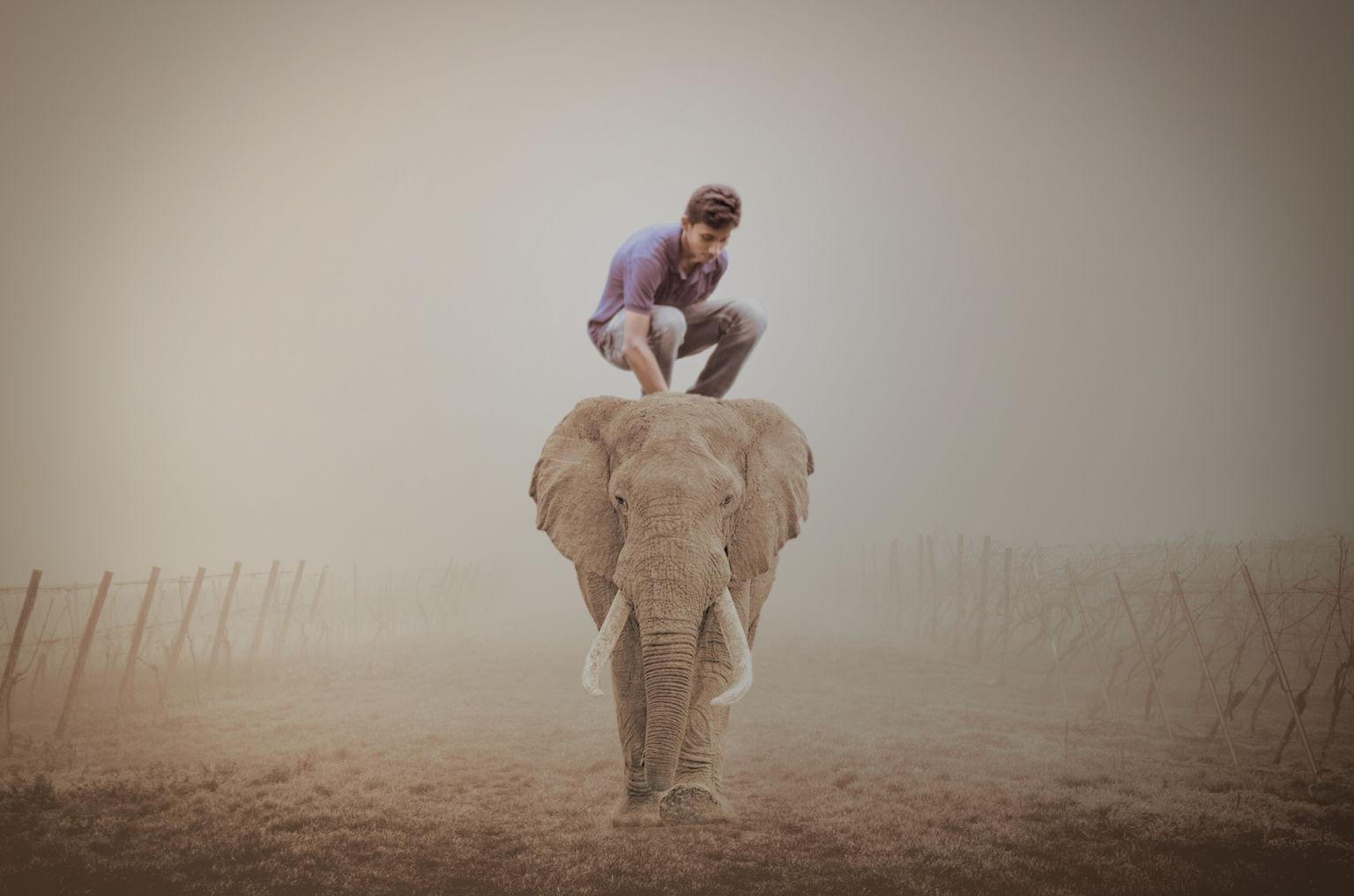 (Elephant Ride) হাতির উপর বসুন ফটোশপের মাধ্যমে…