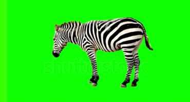 হবেন নাকি গ্রাফিক ডিজাইনার ? তবে জেনে নিন Green screen effect সম্পর্কে কিছু তথ্য । সাথে ফ্রি হিসেবে থাকছে গ্রিন স্ক্রিন stock video গুলো ফ্রিতে ডাওনলোড করার লিংক ।